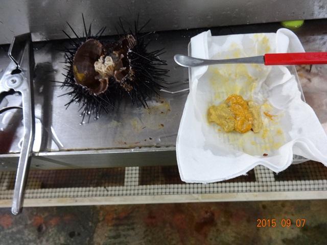 ウニ剥き体験3